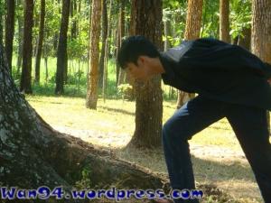 Pepohonan di Sekitar Candi